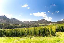 South African Hops