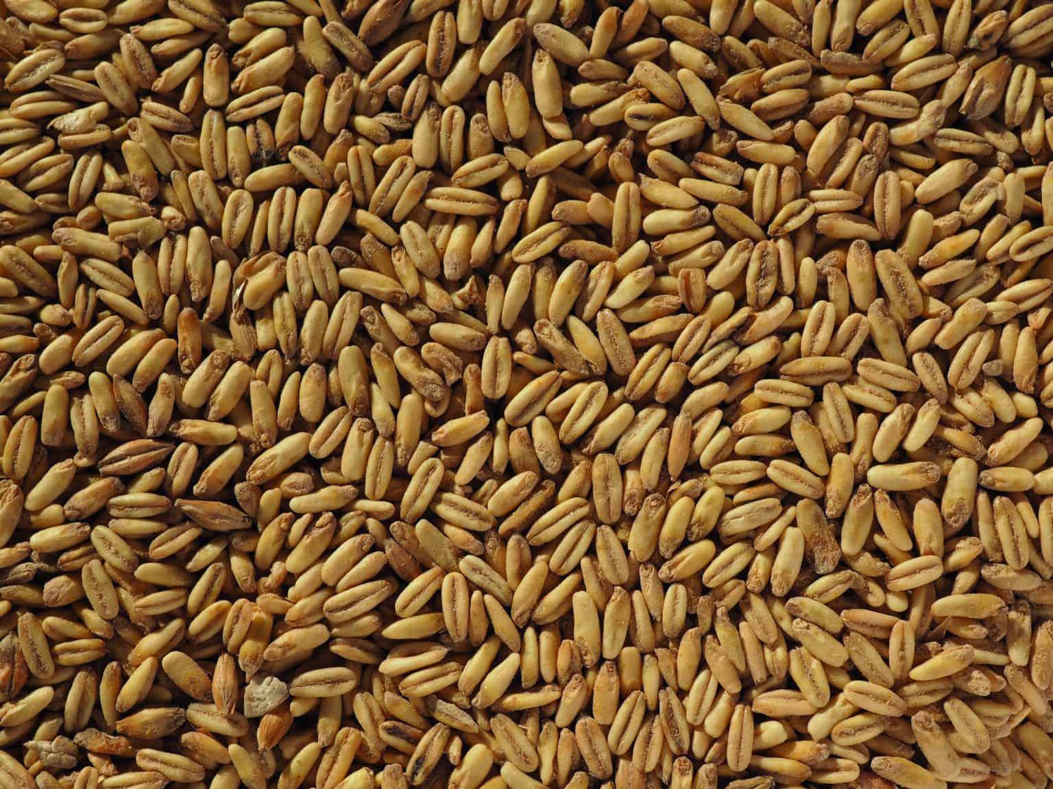 Malta Simpsons Golden Naked oats (avena malteada) sin